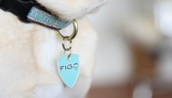 Traveling with Pets? Get Figo Pet Insurance