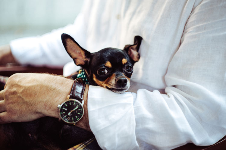 Tips for Traveling with Pets on an Airplane